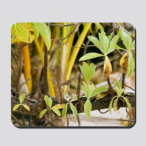 Mangrove shoots (Bruguiera sp.) Mousepad
