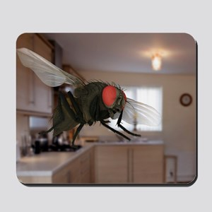 Male lesser housefly in flight, SEM Mousepad