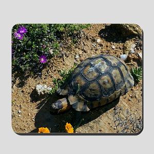 Male angulate tortoise Mousepad