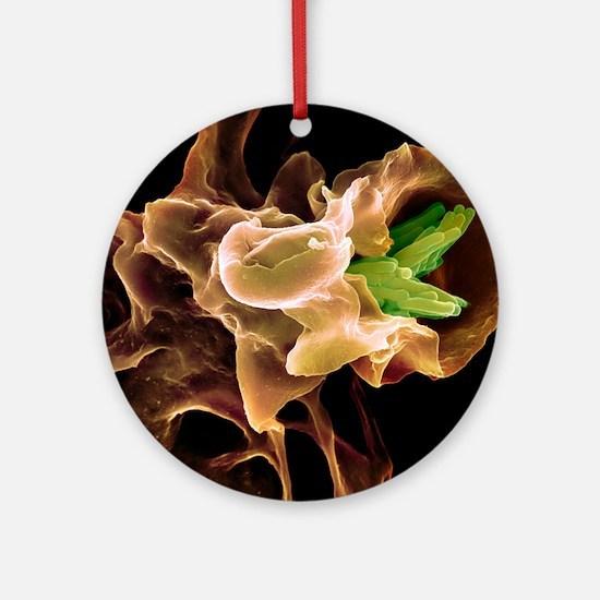 Macrophage engulfing TB bacteria, S Round Ornament