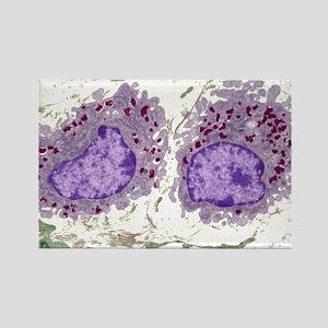 Macrophage cells, TEM Rectangle Magnet