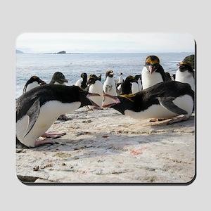 Macaroni penguin breeding display Mousepad