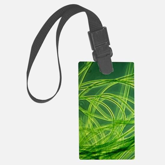 LM of filamentous blue-green alg Luggage Tag