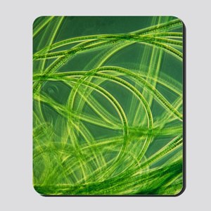 LM of filamentous blue-green algae Mousepad