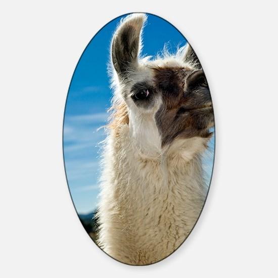 Llama Sticker (Oval)