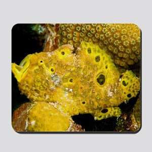 Longlure frogfish Mousepad