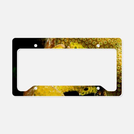 Longlure frogfish License Plate Holder
