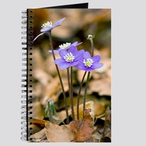 Liverleaf (Hepatica nobilis) Journal