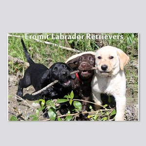 Eromit- Lab puppies Postcards (Package of 8)