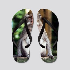 Long-tailed macaque Flip Flops