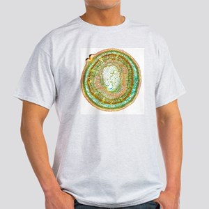 Lime tree stem, light micrograph Light T-Shirt
