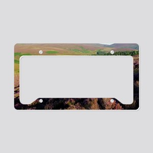 Ling heather (Calluna vulgari License Plate Holder