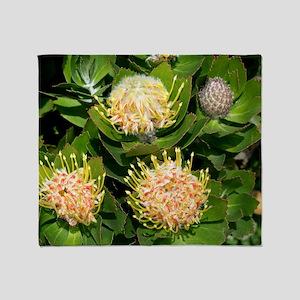 Leucospermum cordifolium 'Veldt Fire Throw Blanket