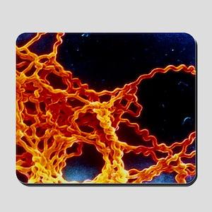 Leptospira sp. bacteria Mousepad
