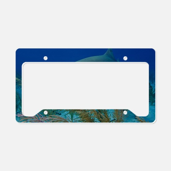 Lemon shark License Plate Holder