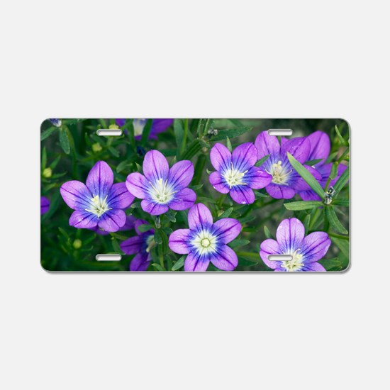 Legousia pentagonia flowers Aluminum License Plate