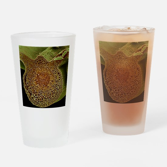 Leaf midrib, SEM Drinking Glass
