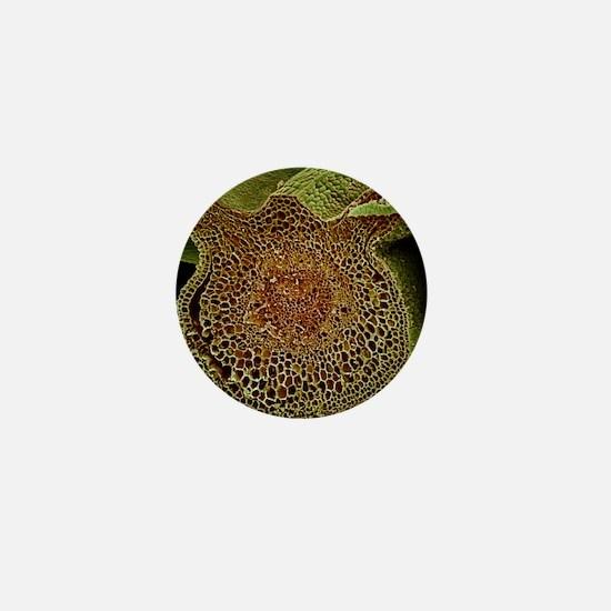 Leaf midrib, SEM Mini Button