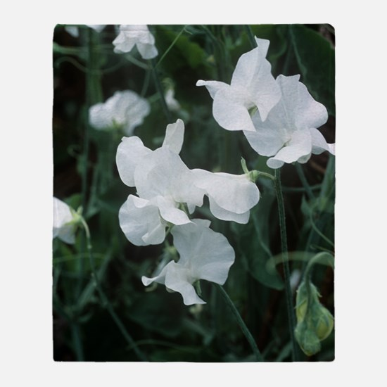 Lathyrus odoratus 'White Supreme' Throw Blanket