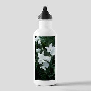 Lathyrus odoratus 'Whi Stainless Water Bottle 1.0L