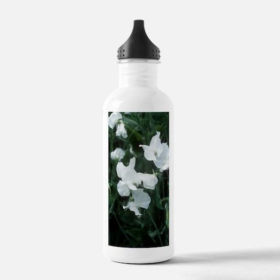 Lathyrus odoratus 'Whi Water Bottle