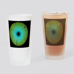 Laue diffraction of enzyme Rubisco Drinking Glass