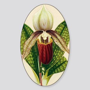 Lady's slipper orchid Sticker (Oval)