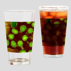 La Crosse encephalitis virus, TEM Drinking Glass