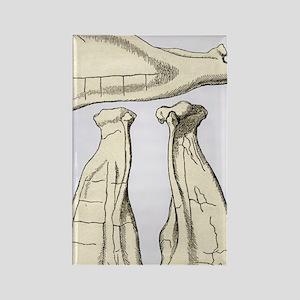 Kalmyk bone divination scapulas,  Rectangle Magnet