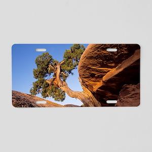 Juniper tree Aluminum License Plate