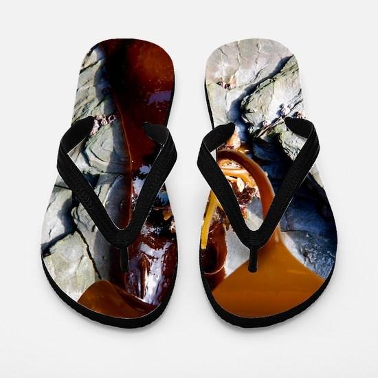 Kelp holdfast (Laminaria digitata) Flip Flops