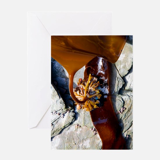 Kelp holdfast (Laminaria digitata) Greeting Card