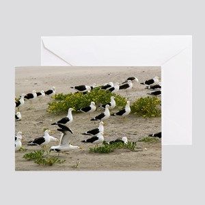 Kelp gulls on a beach Greeting Card
