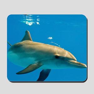 Juvenile Atlantic spotted dolphin Mousepad