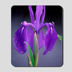 Japanese water iris (Iris laevigata) Mousepad