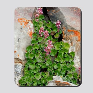 James' Saxifrage (Telesonix jamesii) Mousepad