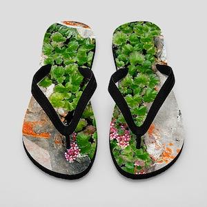 James' Saxifrage (Telesonix jamesii) Flip Flops
