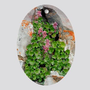 James' Saxifrage (Telesonix jamesii) Oval Ornament