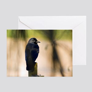 Jackdaw on a fence post Greeting Card