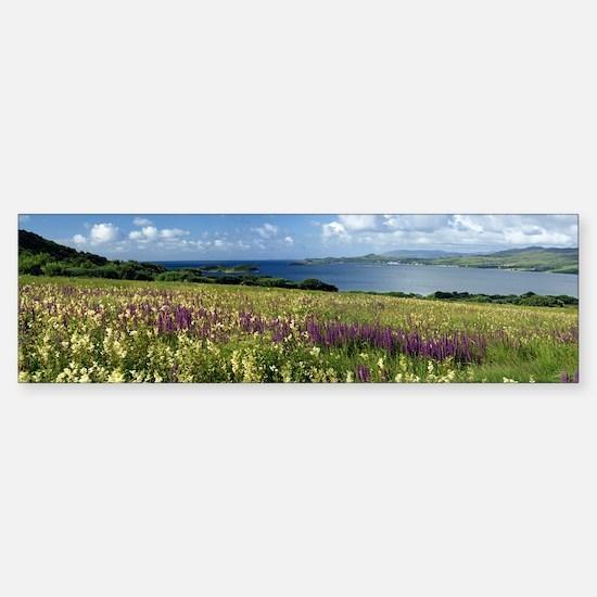Isle of Jura, Scotland Sticker (Bumper)