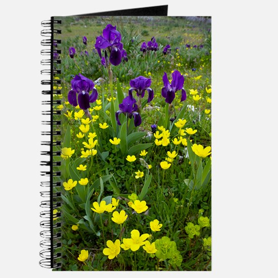 Iris lutescens and Ranunculus Journal