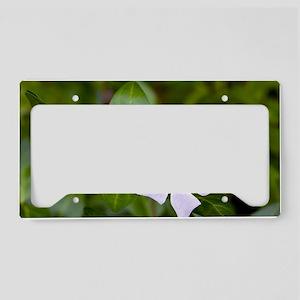 Intermediate periwinkle (Vinc License Plate Holder