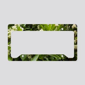 Hydrangea serratifolia flower License Plate Holder