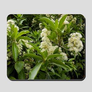 Hydrangea serratifolia flowers Mousepad
