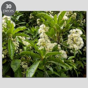 Hydrangea serratifolia flowers Puzzle