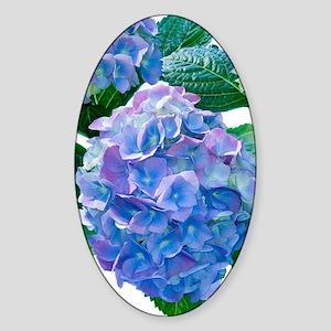 Hydrangea (Hydrangea macrophylla) Sticker (Oval)