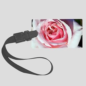Hybrid tea rose (Rosa 'Savoy Hot Large Luggage Tag