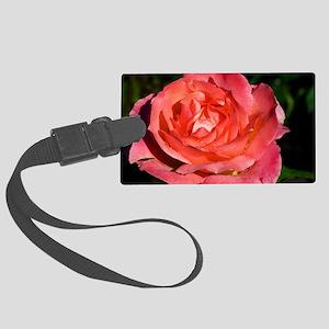 Hybrid tea rose (Rosa 'Lovely La Large Luggage Tag