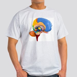 Human brain anatomy, artwork Light T-Shirt