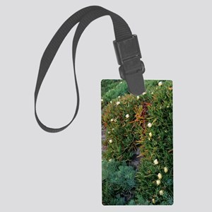 Hottentot fig (Carpobrotus eduli Large Luggage Tag